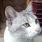 どら猫屋さんのプロフィール画像