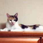redram_cat_keeneeさんのプロフィール画像