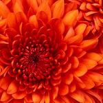 giwia80268さんのプロフィール画像