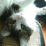 yu_tama11さんのプロフィール画像
