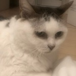 freeyukinekoさんのプロフィール画像