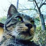 norihiko_okayamaさんのプロフィール画像
