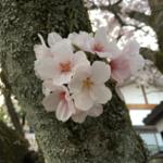 jun1nakahashiさんのプロフィール画像