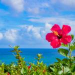 flowermikumikuさんのプロフィール画像