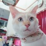 yuari715さんのプロフィール画像