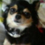 mamemama123さんのプロフィール画像