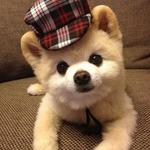 ボボラヤフー店さんのプロフィール画像