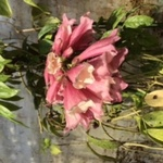 EXOTIC PLANTSさんのプロフィール画像