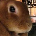 shinji36さんのプロフィール画像