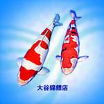 大谷錦鯉店 さんのプロフィール画像