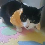 chobi20050815さんのプロフィール画像