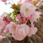 sakura332525さんのプロフィール画像