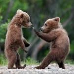 kuma_vs_bearさんのプロフィール画像