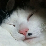 inoguchi3さんのプロフィール画像