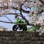 tanago2019さんのプロフィール画像