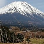 tooji_natsukoさんのプロフィール画像