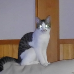 yusuke_t1さんのプロフィール画像