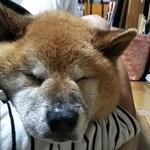 sakuchariさんのプロフィール画像
