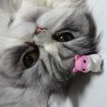 komomoz2354さんのプロフィール画像