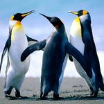 doradora8484さんのプロフィール画像