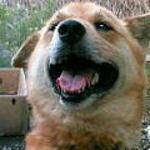 yoppa_toochanさんのプロフィール画像