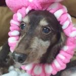 ninachokoさんのプロフィール画像