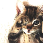 lisa_n_checkさんのプロフィール画像